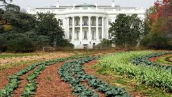 White house garden c/o Treehugger